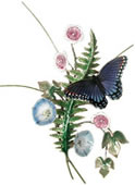 Red Spotted Butterfly with Fern and Morning Glory