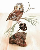 Saw-Whet Owl on Manzanita, Tabletop