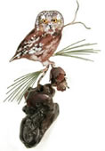 Saw-Whet Owl on Manzanita Wall Sculpture
