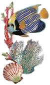 Emperor Angelfish with Coral/Scallop (Wall Sculpture)