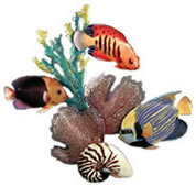 Angelfish & Rock Beauty Wall Sculpture