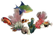Queen Trigger Fish, Flame Angel, Trigger, Anemone Wall Sculpture