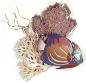 Blue Ring Angelfish and Sea Fans Wall Sculpture