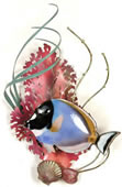 Powder Blue Surgeonfish and Coral