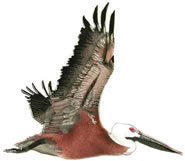 Brown Pelican (Large) Wall Sculpture
