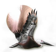 Flying Pelican With Large Copper Sun Wall Sculpture