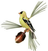 Goldfinch Profile on Pine Bough