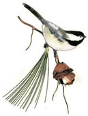 Chickadee with 3D Pine Cone
