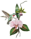 Broad Tailed Hummingbird with Pink OrchidWall Sculpture