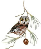 Saw Whet Owl on Pine Wall Sculpture