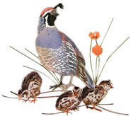 Quail Male & Chicks Wall Sculpture