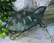 Turtle Fountain-Medium