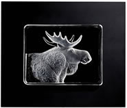 Moose- Framed Crystal Wall Sculpture