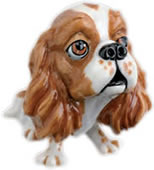 Trudi the Cavalier King Charles Spaniel