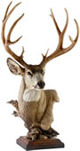 Out West Mule Deer Sculpture