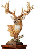 Noble Bearing Whitetail Deer Sculpture