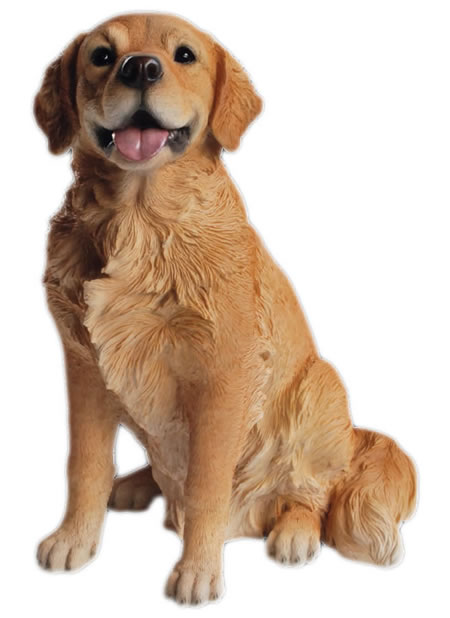 Golden Retriever Sitting- 21