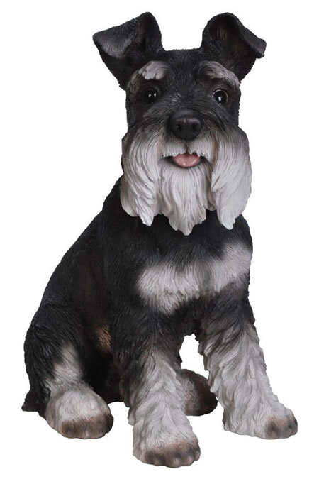 Miniature Schnauzer- Black/White- 13.75