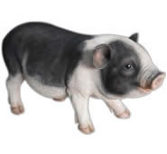 "Realistic Pot Bellied Pig Statue- 17""L"