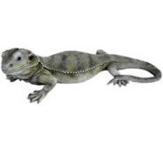 "Bearded Dragon Statue- 12.25""L"