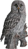 "Great Grey Owl Statue- 14.75""H"