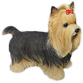 "Yorkshire Terrier with Bow Statue- 7.75""L"