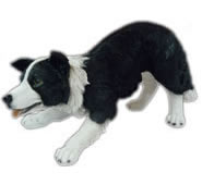 "Realistic Border Collie Statue 14.25""L"