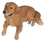 "Golden Retriever Lying Statue- 24.75""L"