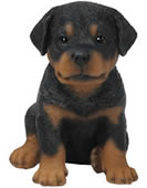 Realistic Rottweiler Puppy Statue