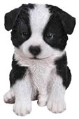 Realistic Border Collie Puppy Statue