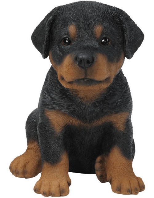 realistic rottweiler puppy statue natures gallery all. Black Bedroom Furniture Sets. Home Design Ideas