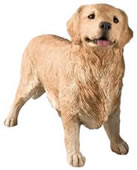 Golden Retriever Statue, Standing