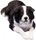 Border Collie Dog Statue