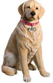Life Size Light Golden Retriever Dog Statue