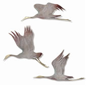 Crane Wall Plaques, Set of 3