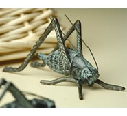 Cricket, Large