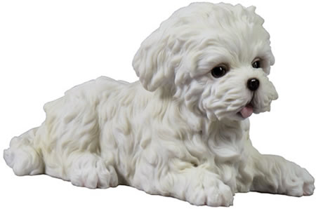 Maltese Puppy Dog Studio Collection