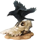 Crow With Open Wings On Sheep Skull Statue