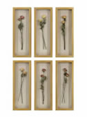 Rosalie Long Stemmed Roses Shadow Box, Set of 6