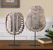 Turtle Shell Sculptures, Set of 2